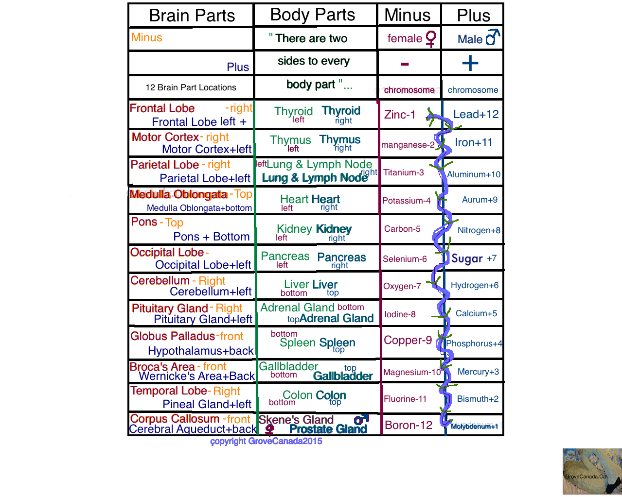 Brain & Body Part Charts together