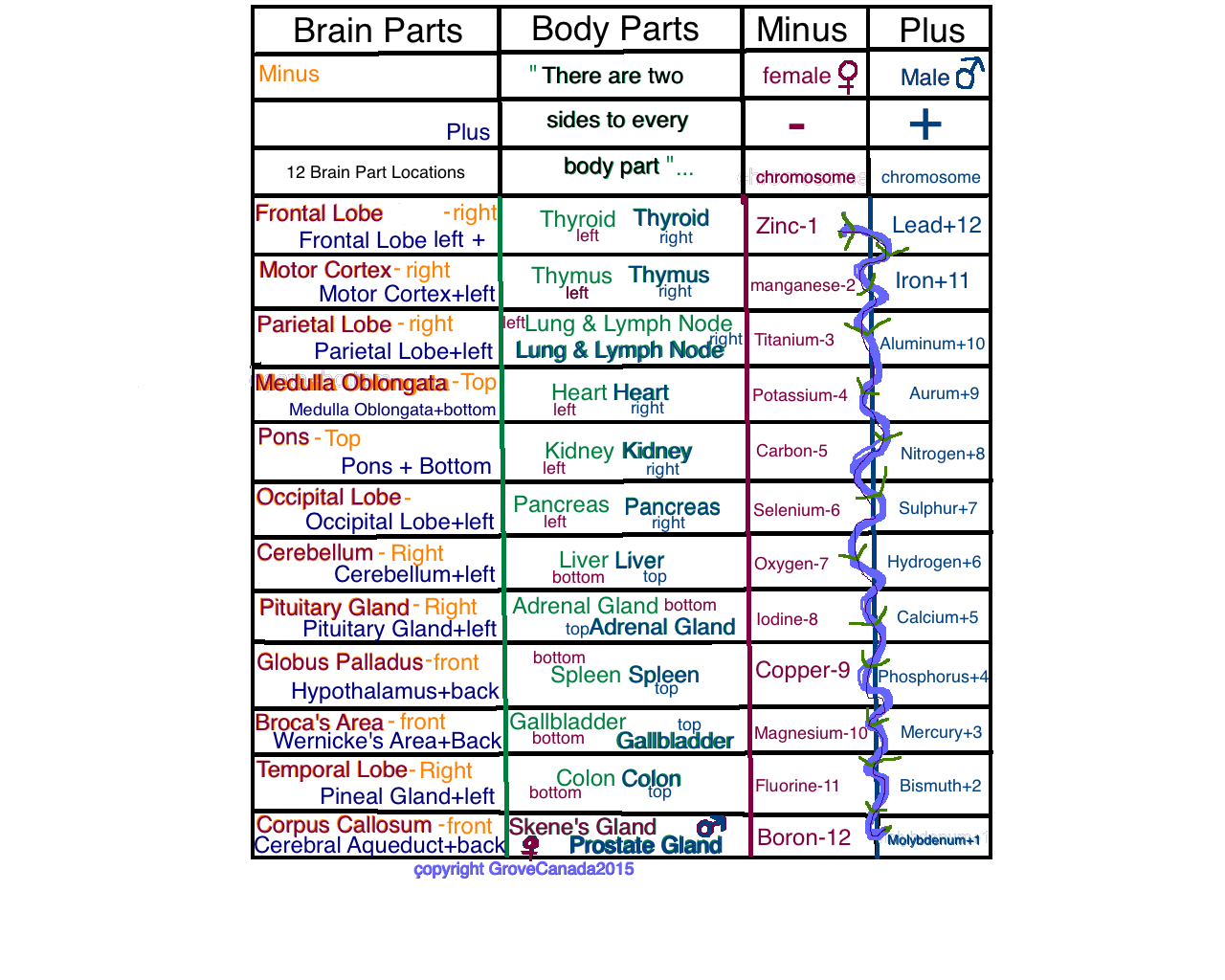 Grove Brain 'n Body Part Chart