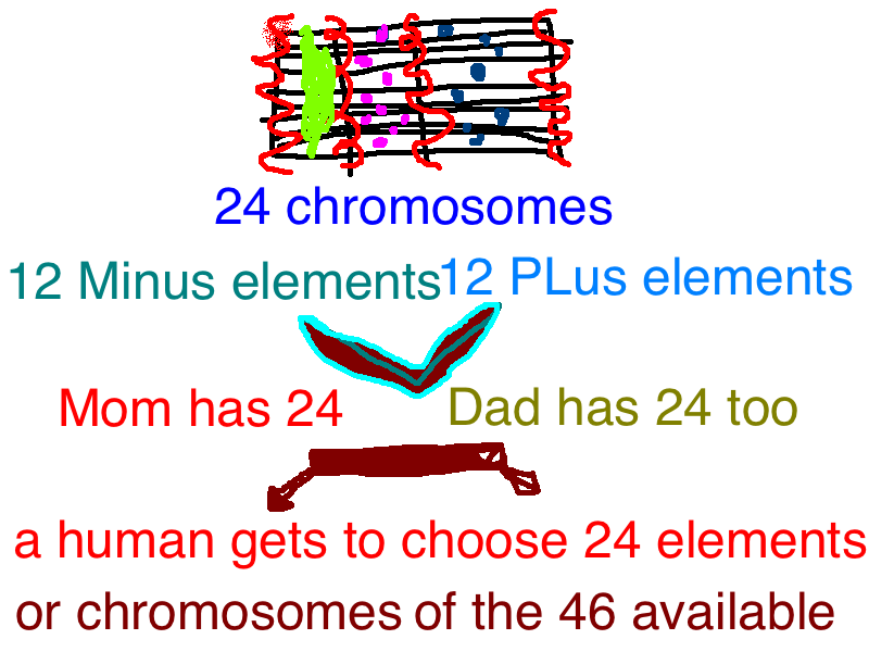 elements are chromosomes